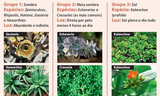 plantas de jardim que gostam de umidade : plantas de jardim que gostam de umidade: suculentas em três grupos de acordo com a necessidade de luz do sol