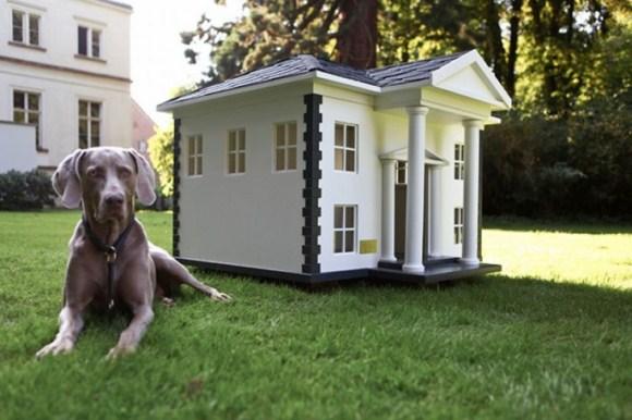 casa animais - 1
