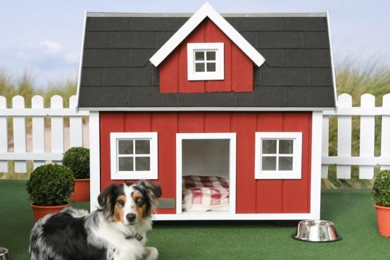 casa animais - 2