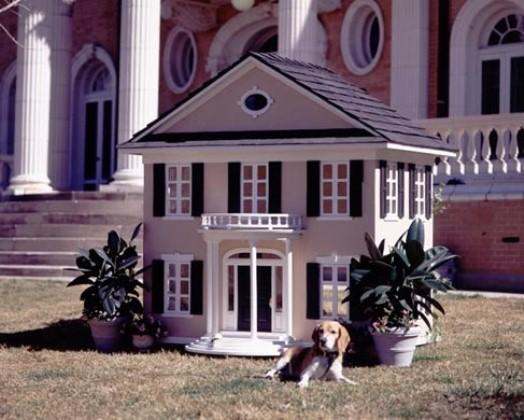 casa animais - 6