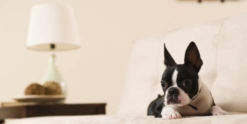cachorro-apartamento
