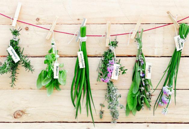 repelente-natural-ervas
