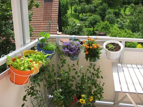 plantas na sacada
